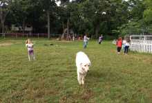 Campers exploring at the Koan School